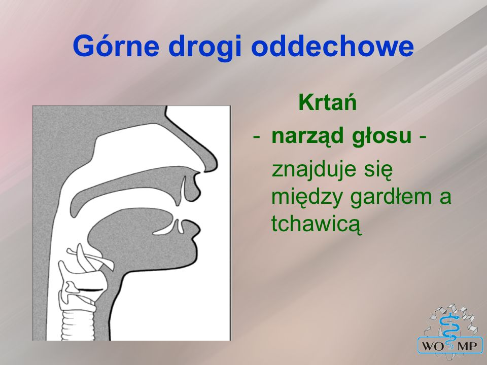 Górne drogi oddechowe Krtań narząd głosu -