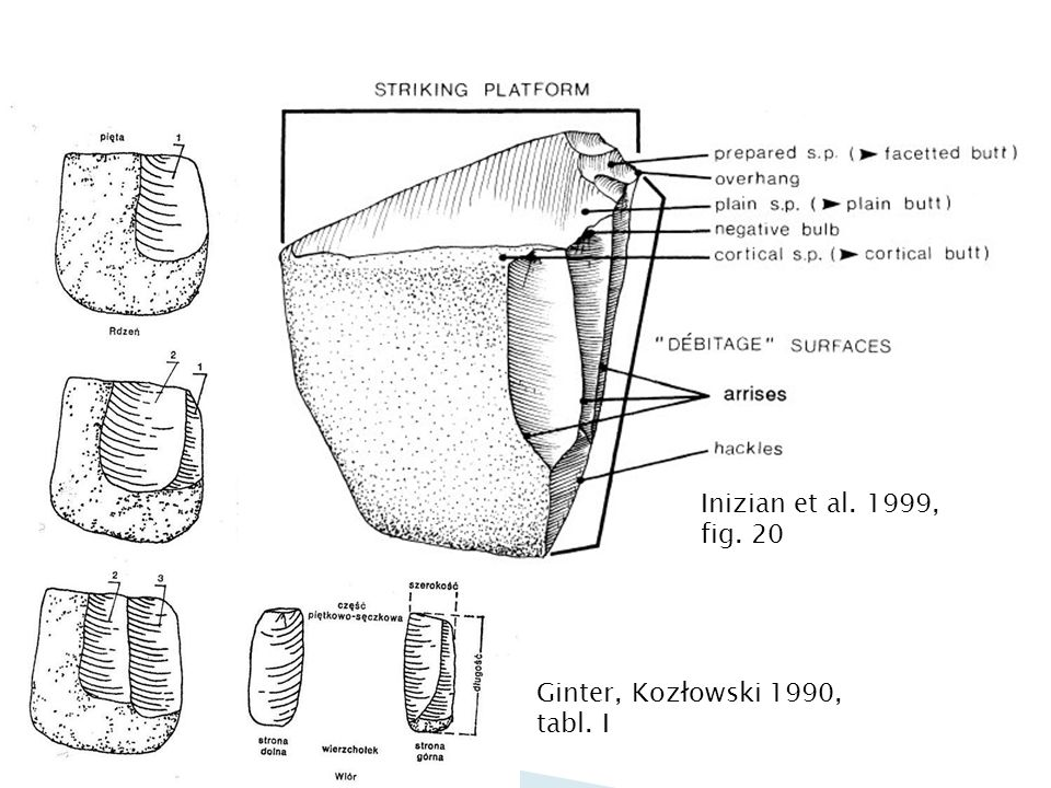 Inizian et al. 1999, fig. 20 Ginter, Kozłowski 1990, tabl. I