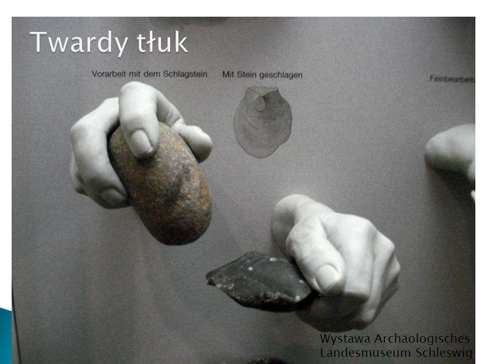 Twardy tłuk Wystawa Archäologisches Landesmuseum Schleswig