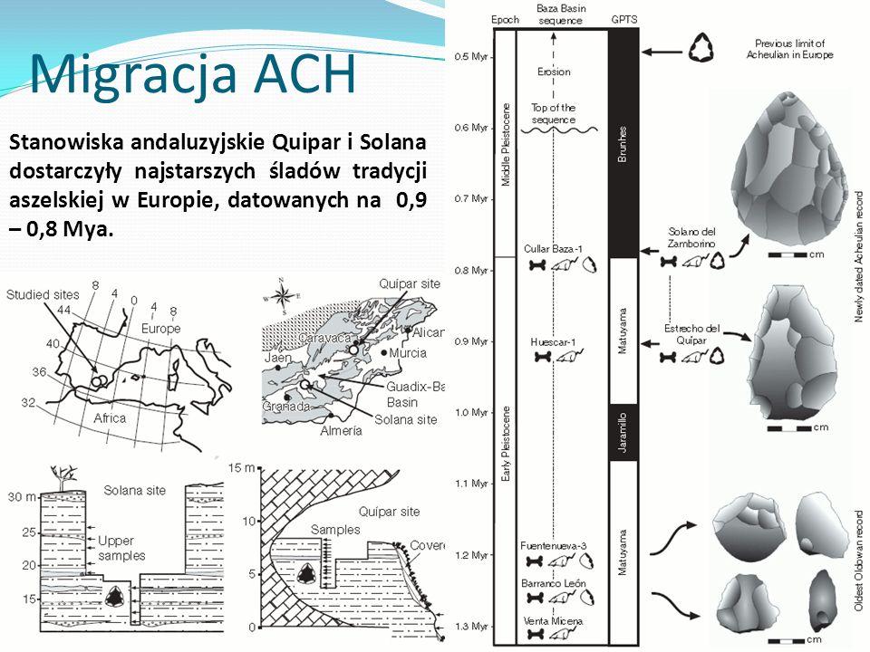 Migracja ACH Stanowiska andaluzyjskie Quipar i Solana dostarczyły najstarszych śladów tradycji aszelskiej w Europie, datowanych na 0,9 – 0,8 Mya.
