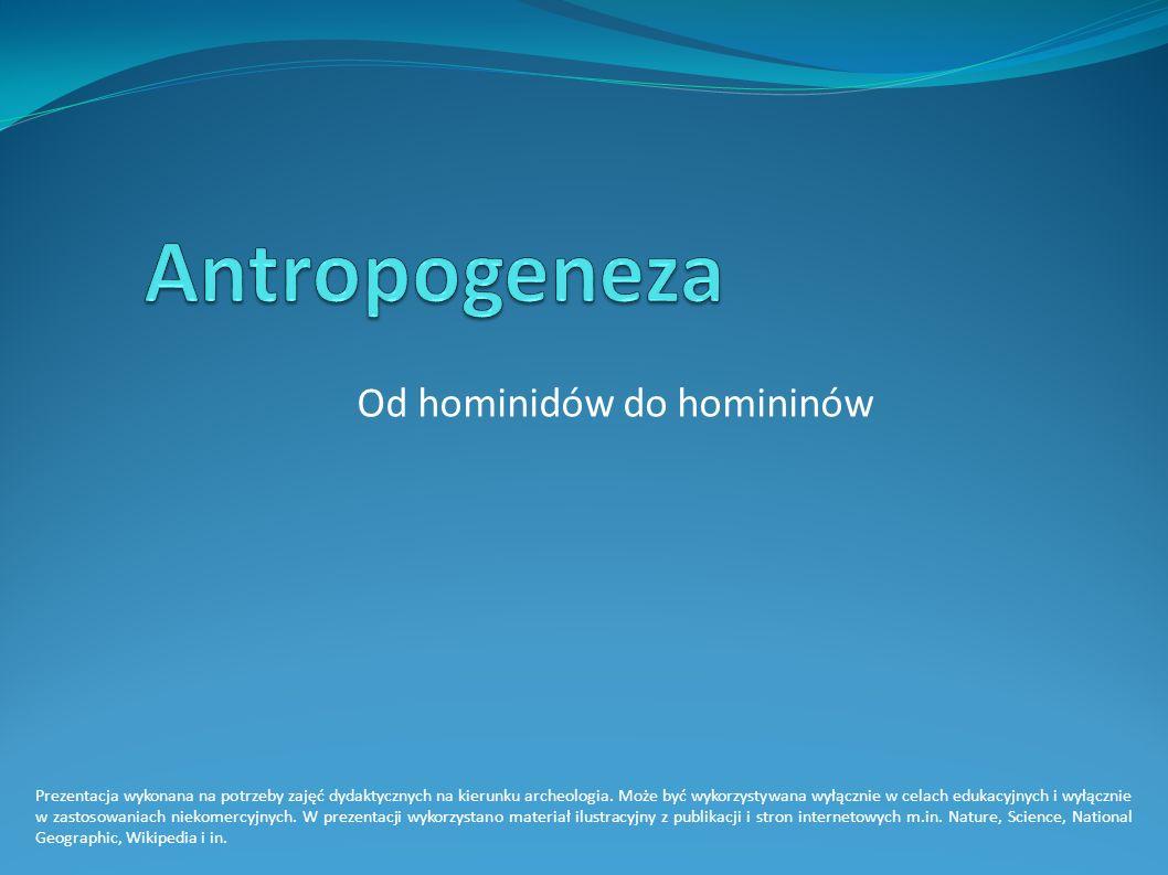 Od hominidów do homininów