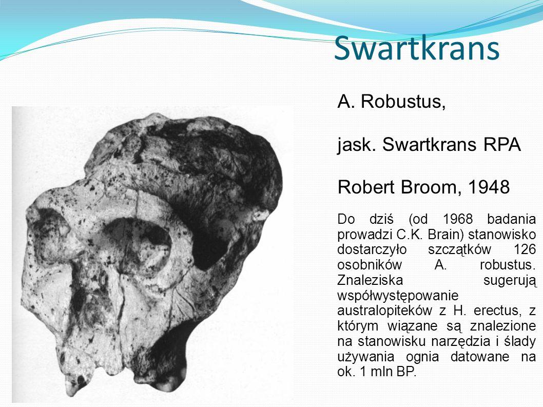 Swartkrans A. Robustus, jask. Swartkrans RPA Robert Broom, 1948