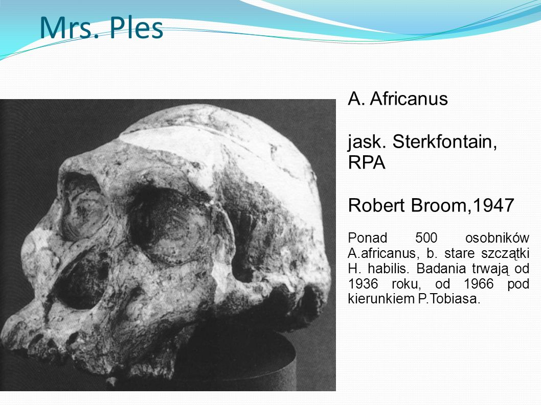 Mrs. Ples A. Africanus jask. Sterkfontain, RPA Robert Broom,1947