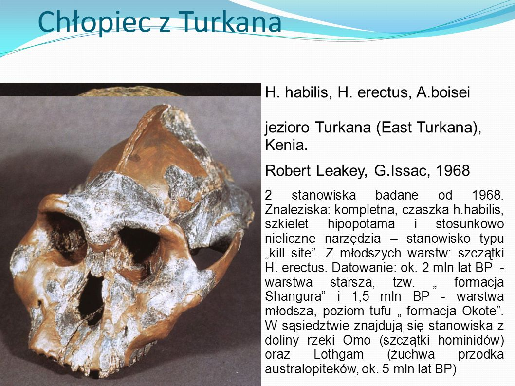 Chłopiec z Turkana H. habilis, H. erectus, A.boisei
