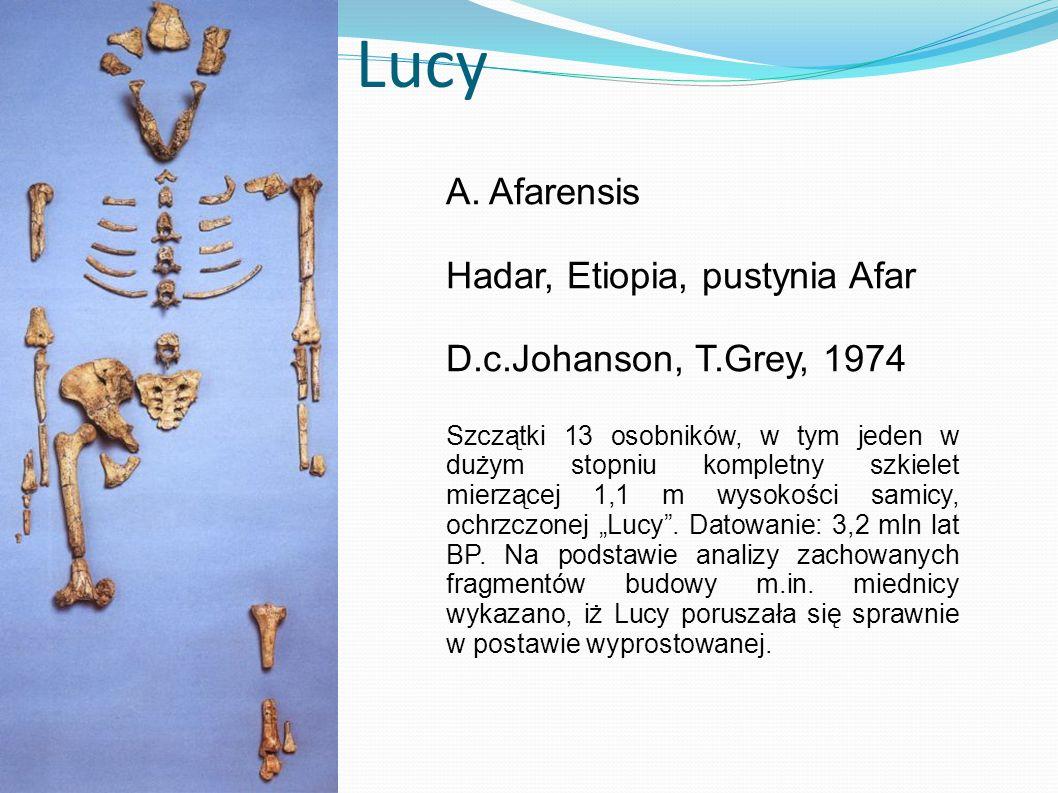 Lucy A. Afarensis Hadar, Etiopia, pustynia Afar