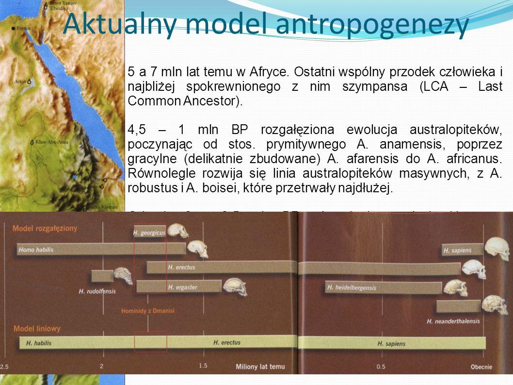Aktualny model antropogenezy