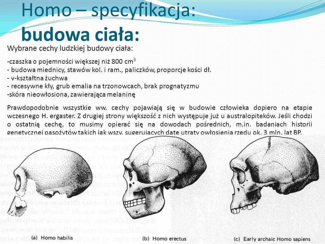 Homo – specyfikacja: budowa ciała: