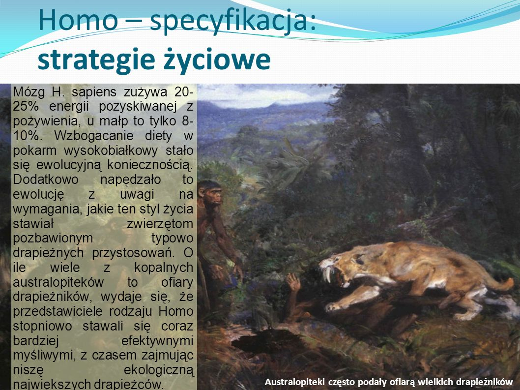 Homo – specyfikacja: strategie życiowe