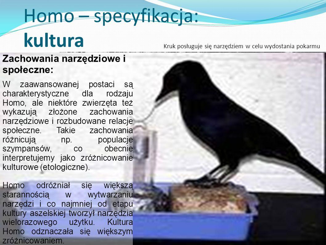 Homo – specyfikacja: kultura