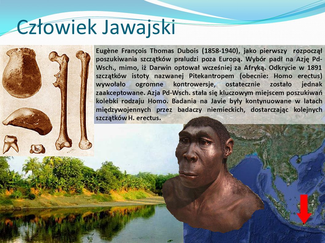 Człowiek Jawajski