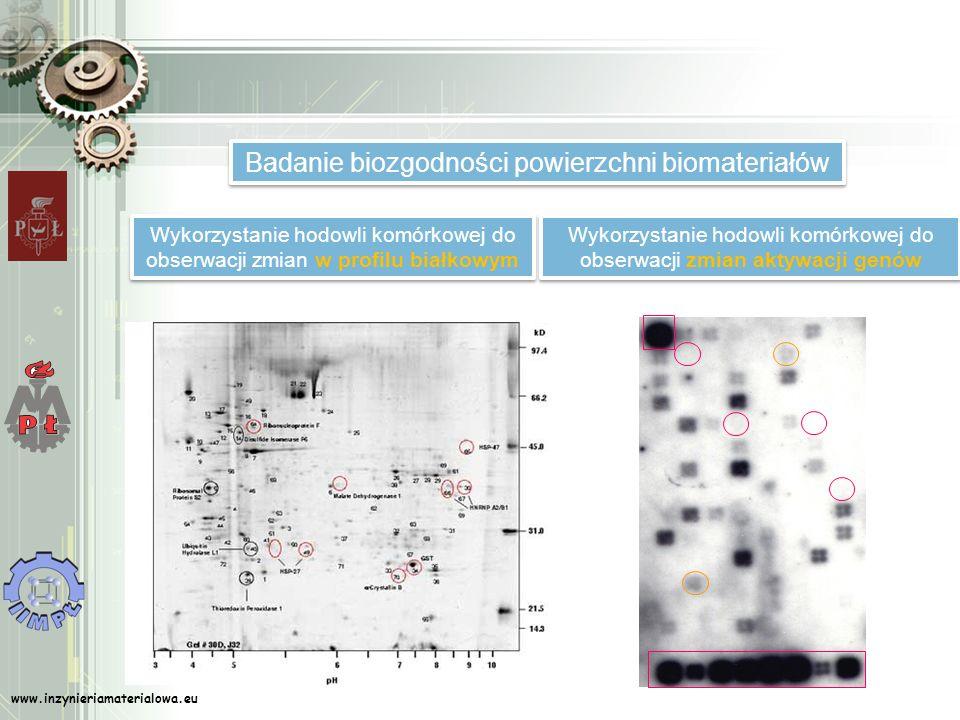 Badanie biozgodności powierzchni biomateriałów