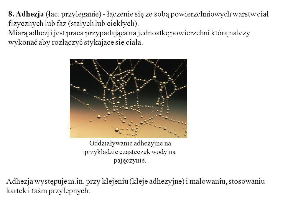 Oddziaływanie adhezyjne na przykładzie cząsteczek wody na pajęczynie.