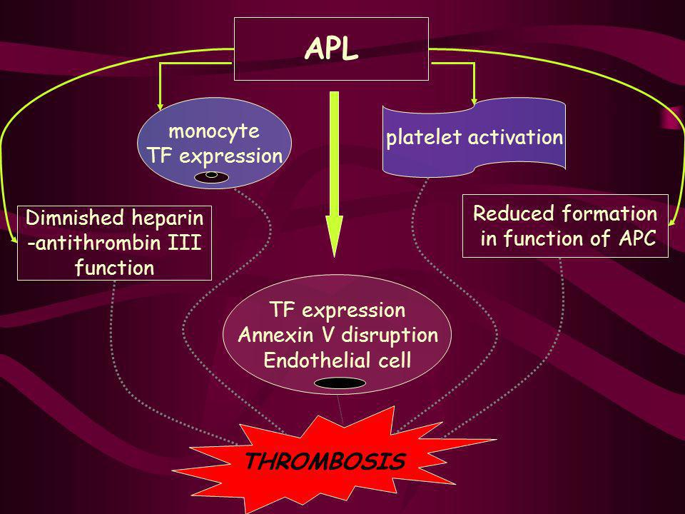 APL THROMBOSIS monocyte platelet activation TF expression