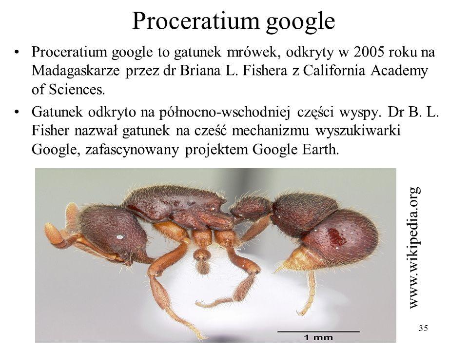Proceratium google