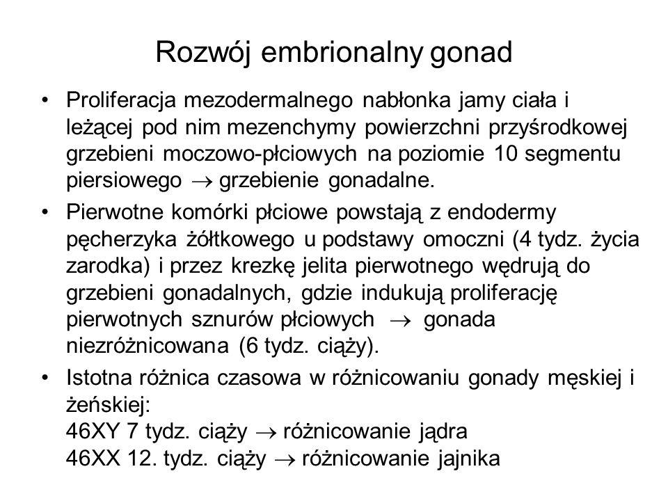 Rozwój embrionalny gonad