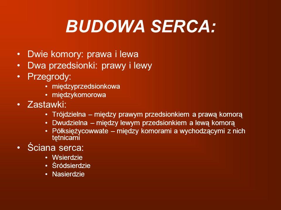 BUDOWA SERCA: Dwie komory: prawa i lewa Dwa przedsionki: prawy i lewy