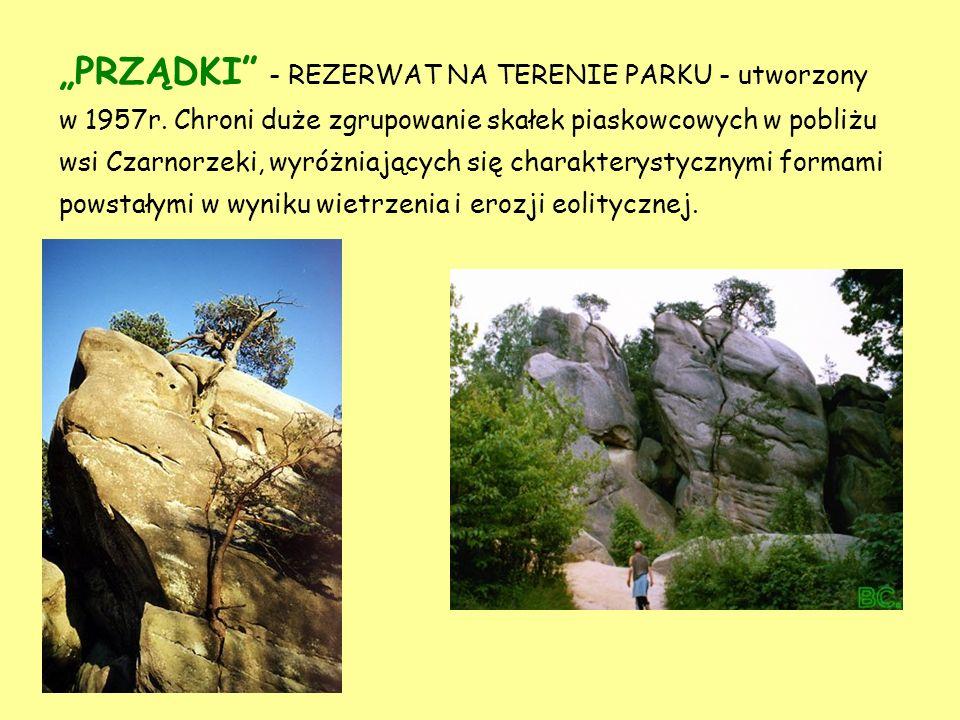 """""""PRZĄDKI - REZERWAT NA TERENIE PARKU - utworzony w 1957r"""