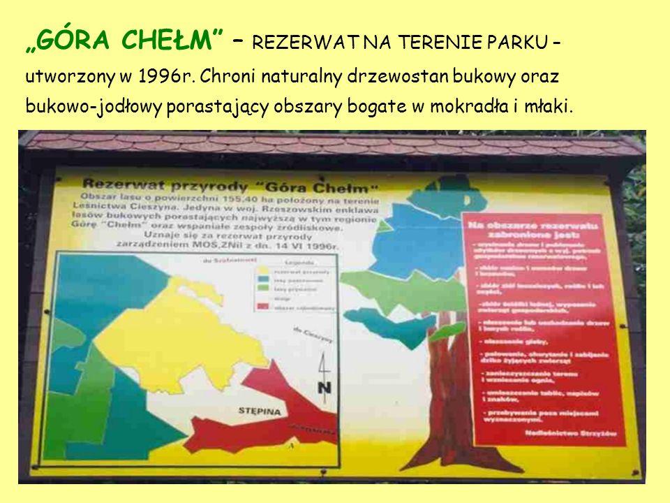 """""""GÓRA CHEŁM – REZERWAT NA TERENIE PARKU – utworzony w 1996r"""