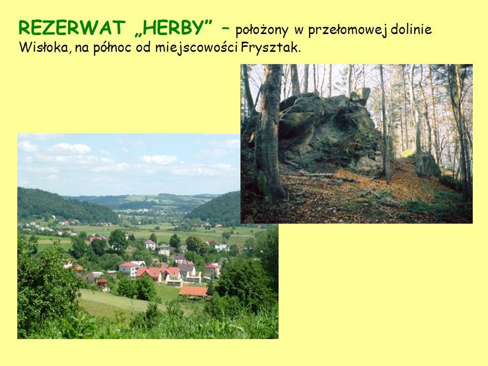 """REZERWAT """"HERBY – położony w przełomowej dolinie Wisłoka, na północ od miejscowości Frysztak."""
