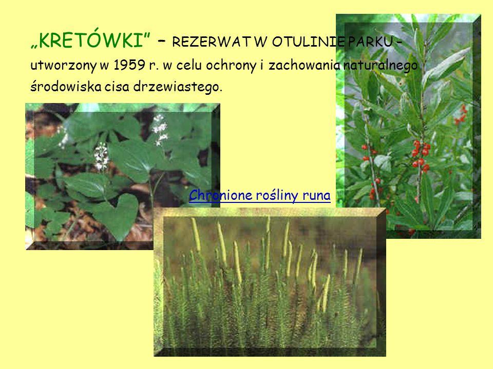 Chronione rośliny runa