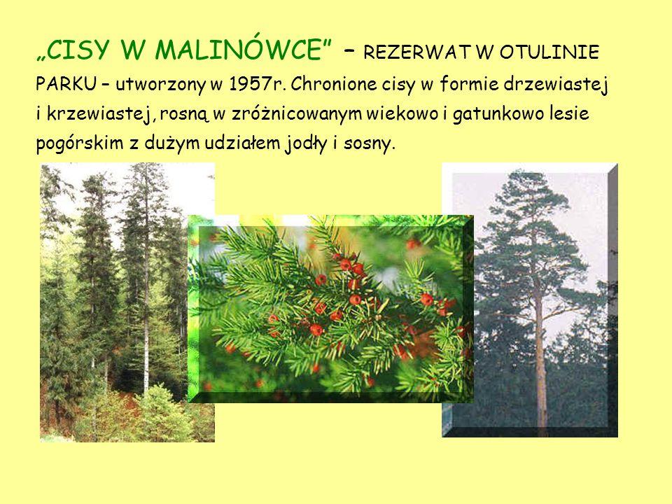"""""""CISY W MALINÓWCE – REZERWAT W OTULINIE PARKU – utworzony w 1957r"""