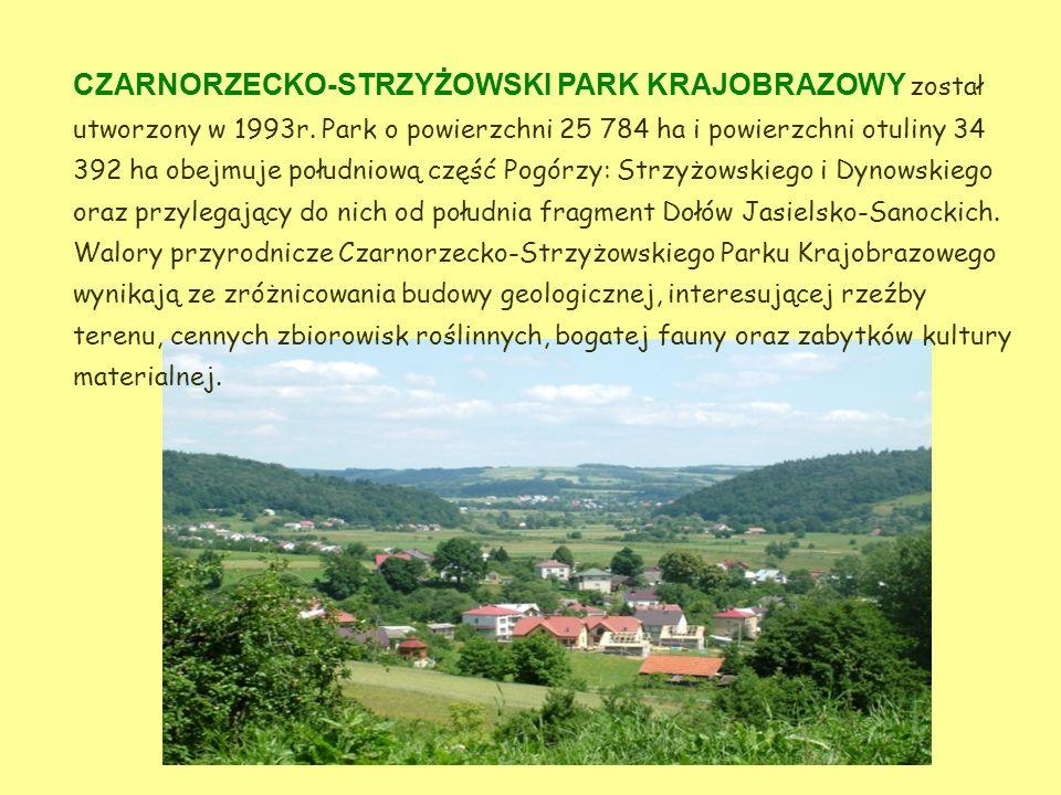 CZARNORZECKO-STRZYŻOWSKI PARK KRAJOBRAZOWY został utworzony w 1993r
