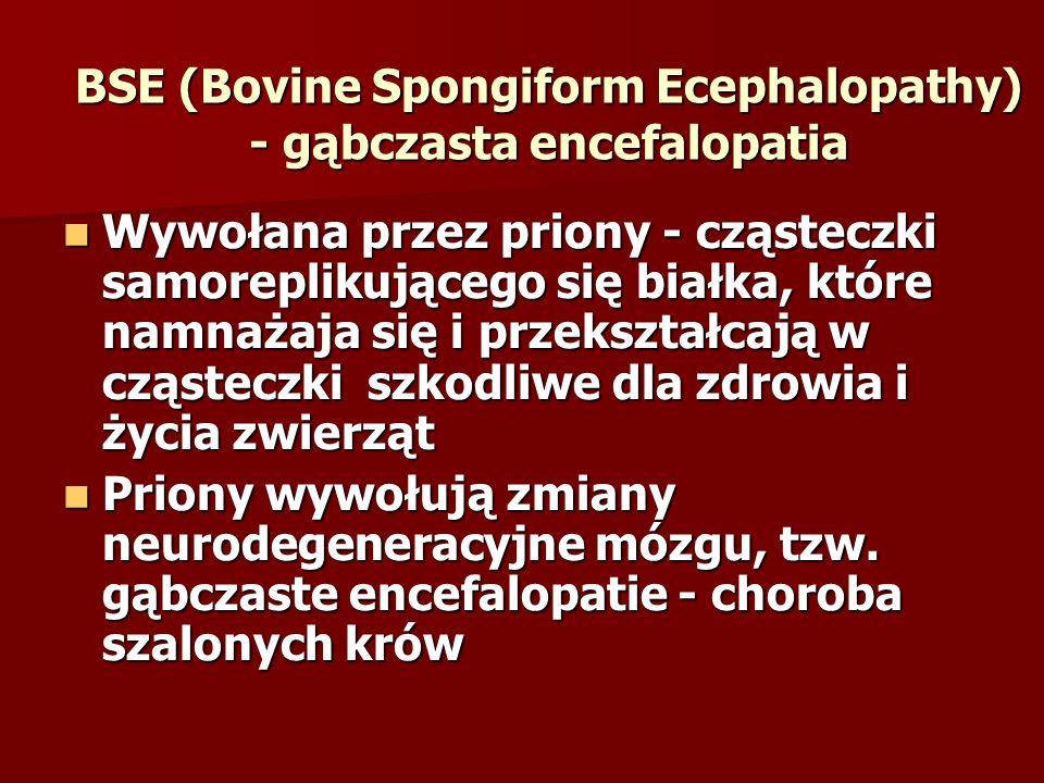BSE (Bovine Spongiform Ecephalopathy) - gąbczasta encefalopatia