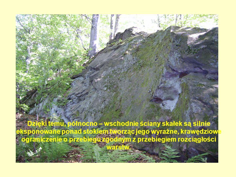 Dzięki temu, północno – wschodnie ściany skałek są silnie eksponowane ponad stokiem tworząc jego wyraźne, krawędziowe ograniczenie o przebiegu zgodnym z przebiegiem rozciągłości warstw.