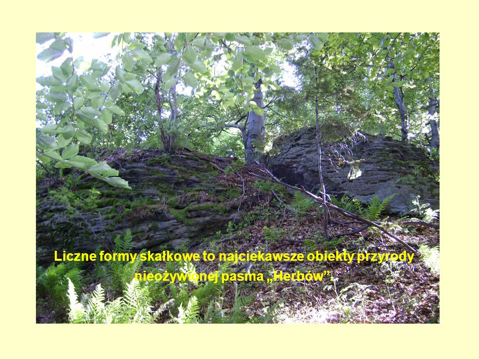 """Liczne formy skałkowe to najciekawsze obiekty przyrody nieożywionej pasma """"Herbów ."""