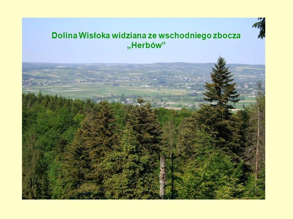 """Dolina Wisłoka widziana ze wschodniego zbocza """"Herbów"""