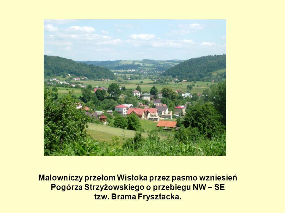 Malowniczy przełom Wisłoka przez pasmo wzniesień Pogórza Strzyżowskiego o przebiegu NW – SE tzw.