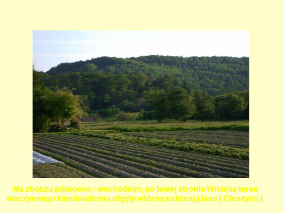 Na zboczu północno - wschodnim, po lewej stronie Wisłoka teren nieczynnego kamieniołomu objęty wtórną sukcesją lasu ( Cieszyna ).