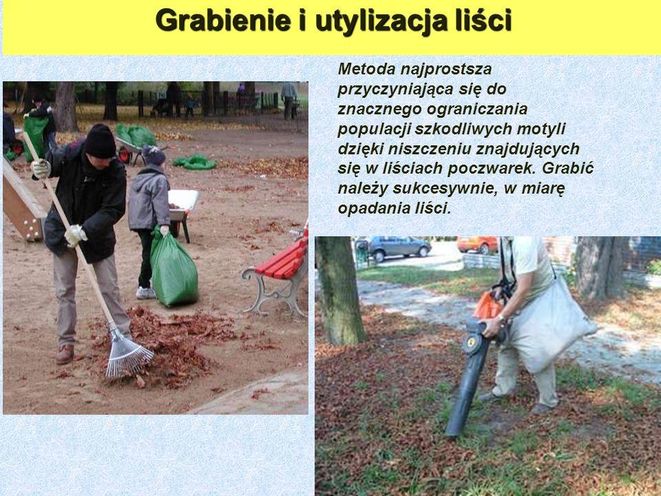 Grabienie i utylizacja liści