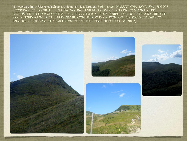 Najwyższą górą w Bieszczadach po stronie polski jest Tarnica 1346 m n