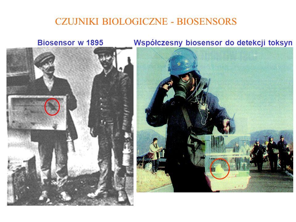 Współczesny biosensor do detekcji toksyn