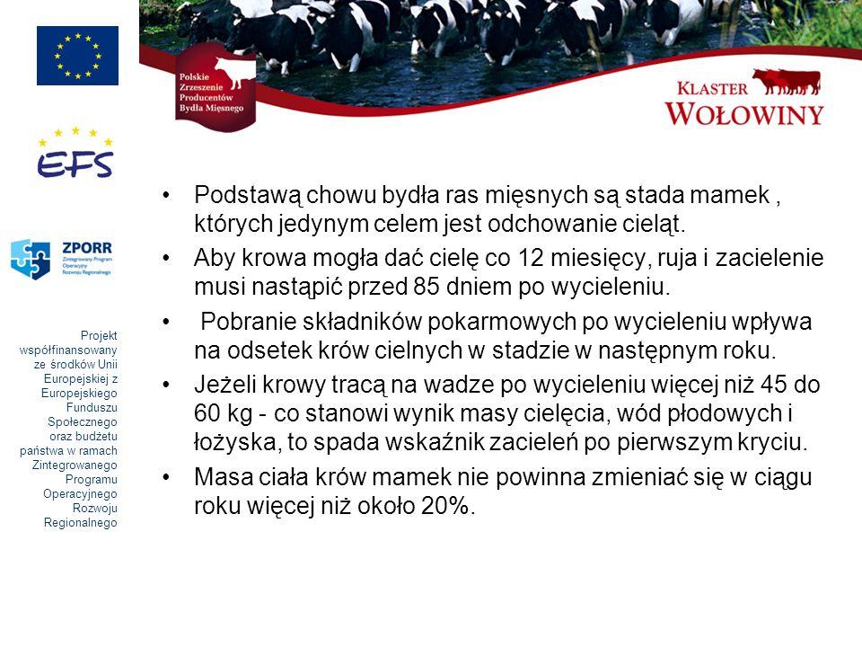 Podstawą chowu bydła ras mięsnych są stada mamek , których jedynym celem jest odchowanie cieląt.