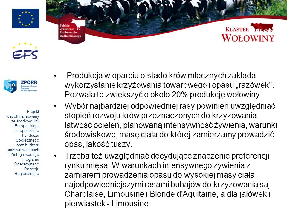 """Produkcja w oparciu o stado krów mlecznych zakłada wykorzystanie krzyżowania towarowego i opasu """"razówek . Pozwala to zwiększyć o około 20% produkcję wołowiny."""
