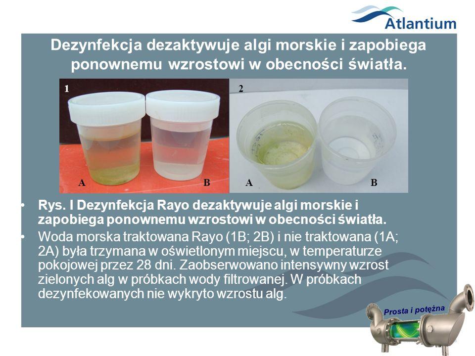 Dezynfekcja dezaktywuje algi morskie i zapobiega ponownemu wzrostowi w obecności światła.