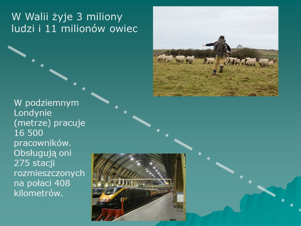 W Walii żyje 3 miliony ludzi i 11 milionów owiec