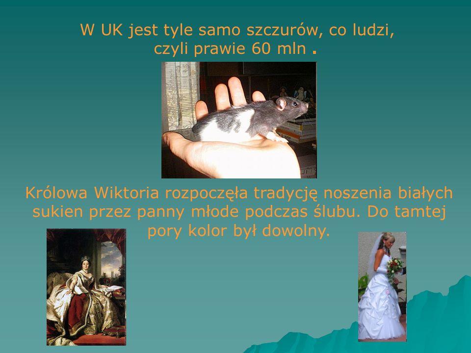 W UK jest tyle samo szczurów, co ludzi, czyli prawie 60 mln .