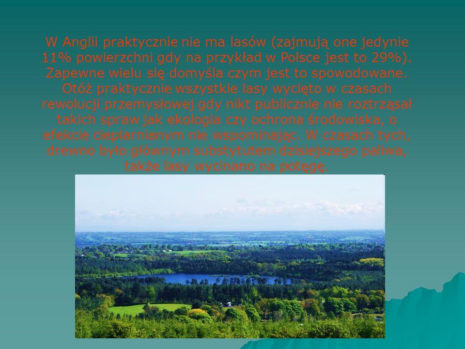 W Anglii praktycznie nie ma lasów (zajmują one jedynie 11% powierzchni gdy na przykład w Polsce jest to 29%).