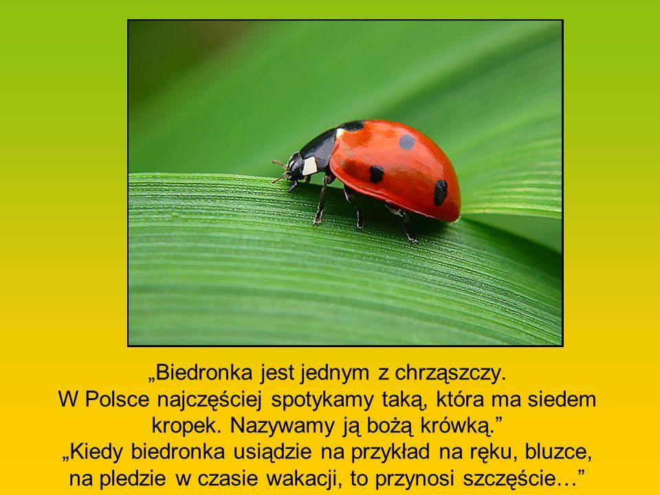 """""""Biedronka jest jednym z chrząszczy"""