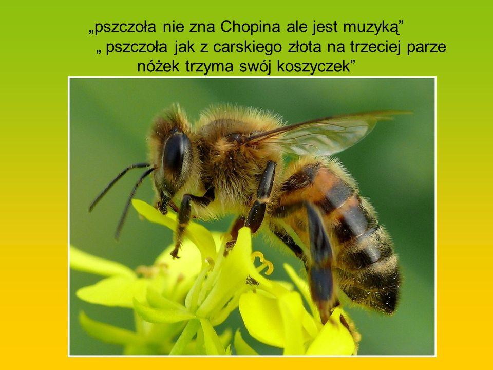 """""""pszczoła nie zna Chopina ale jest muzyką"""