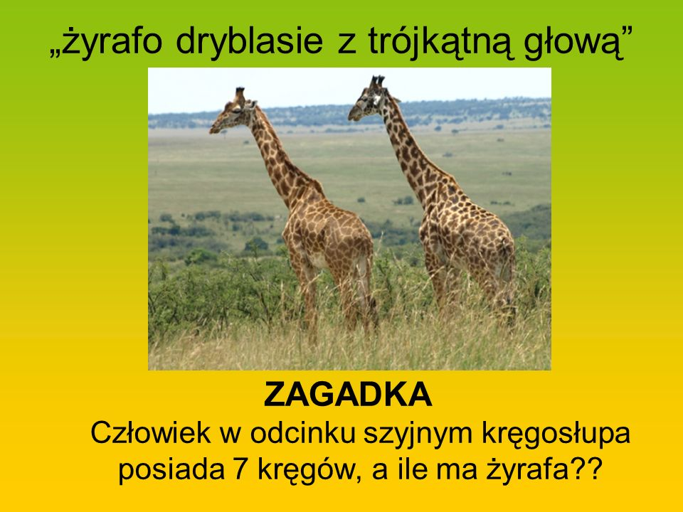 """""""żyrafo dryblasie z trójkątną głową"""
