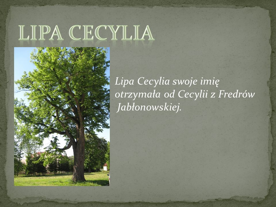 Lipa Cecylia Lipa Cecylia swoje imię otrzymała od Cecylii z Fredrów