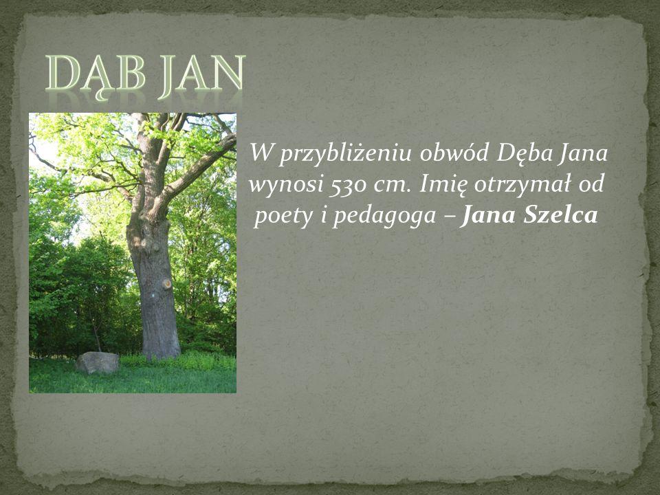 Dąb JAN W przybliżeniu obwód Dęba Jana wynosi 530 cm. Imię otrzymał od