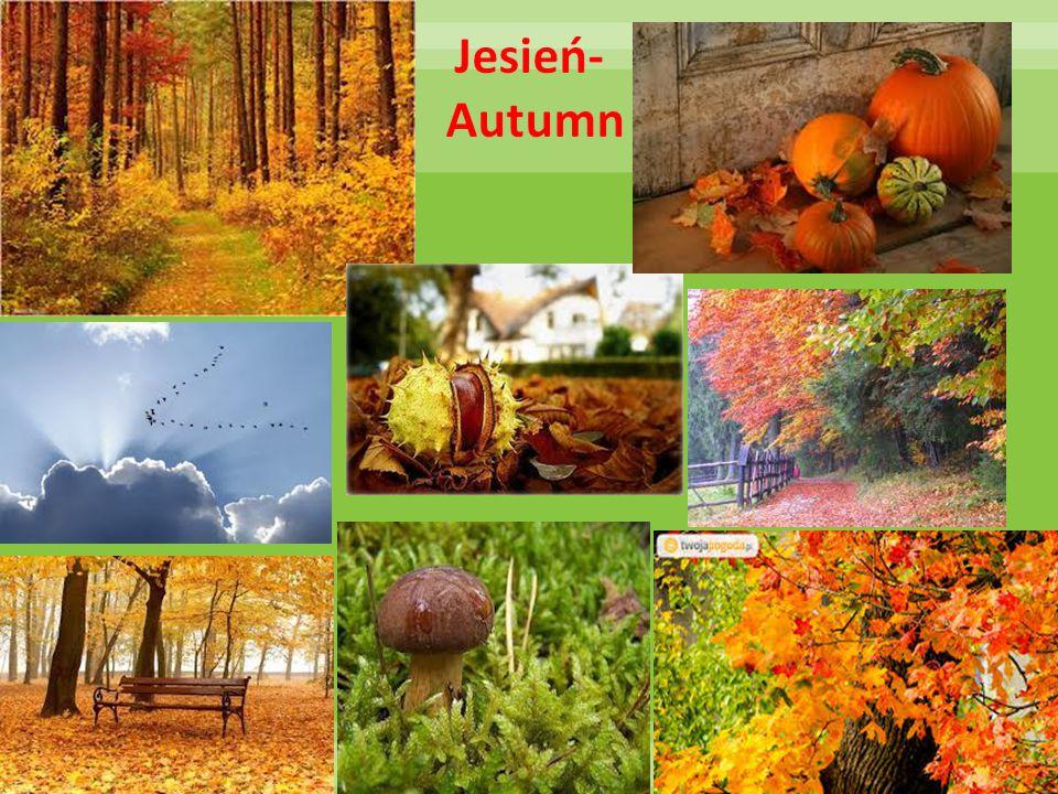 Jesień- Autumn