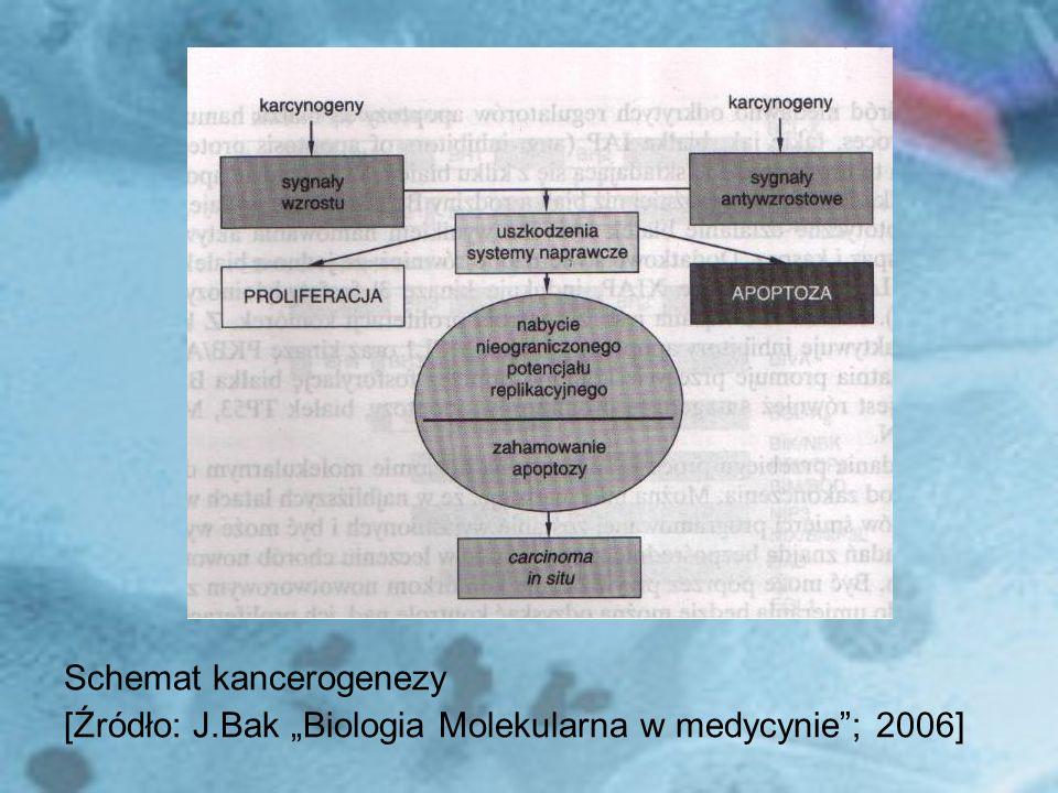 Schemat kancerogenezy