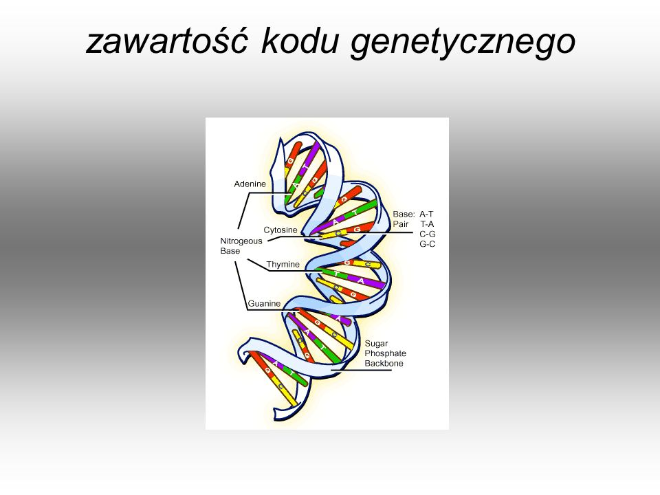 zawartość kodu genetycznego