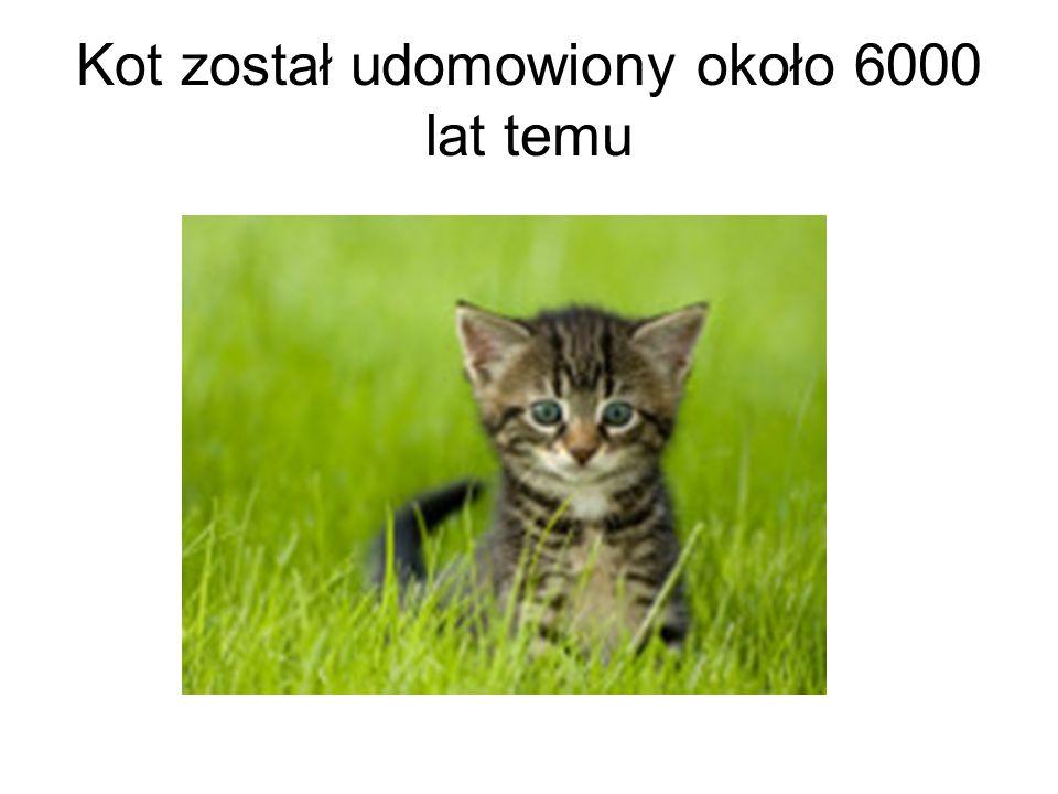 Kot został udomowiony około 6000 lat temu